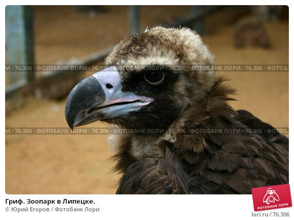 Гриф. Зоопарк в Липецке., фото № 76306, снято 17 июля 2004 г. (c) Юрий Егоров / Фотобанк Лори
