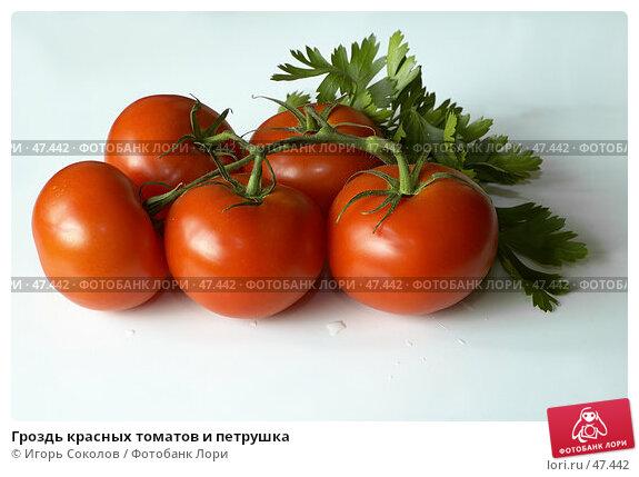 Гроздь красных томатов и петрушка, фото № 47442, снято 26 апреля 2017 г. (c) Игорь Соколов / Фотобанк Лори