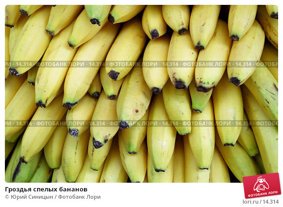 Гроздья спелых бананов , фото № 14314, снято 8 декабря 2016 г. (c) Юрий Синицын / Фотобанк Лори