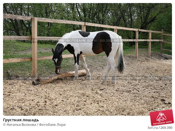Грустная лошадь, эксклюзивное фото № 269390, снято 1 мая 2008 г. (c) Наталья Волкова / Фотобанк Лори