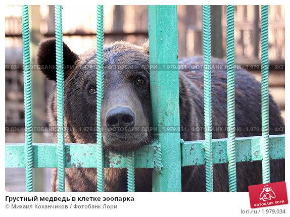 Купить «Грустный медведь в клетке зоопарка», фото № 1979034, снято 5 сентября 2010 г. (c) Михаил Коханчиков / Фотобанк Лори