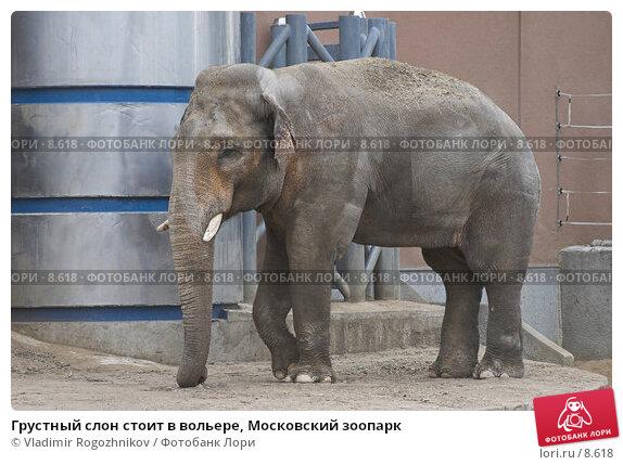 Грустный слон стоит в вольере, Московский зоопарк, фото № 8618, снято 28 мая 2005 г. (c) Vladimir Rogozhnikov / Фотобанк Лори