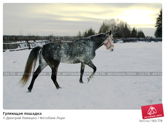 Гуляющая лошадка, фото № 183778, снято 19 января 2008 г. (c) Дмитрий Лемешко / Фотобанк Лори
