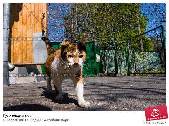 Гуляющий кот, фото № 239826, снято 30 апреля 2017 г. (c) Кравецкий Геннадий / Фотобанк Лори