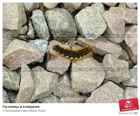 Купить «Гусеница и камушки», фото № 11294, снято 11 июня 2006 г. (c) Екатерина / Фотобанк Лори