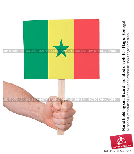 Hand holding small card, isolated on white - Flag of Senegal. Стоковое фото, фотограф Zoonar.com/Micha Klootwijk / age Fotostock / Фотобанк Лори