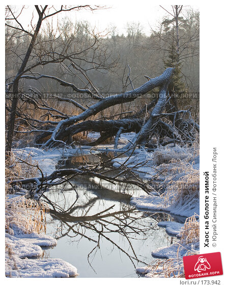 Хаос на болоте зимой, фото № 173942, снято 8 января 2008 г. (c) Юрий Синицын / Фотобанк Лори