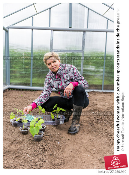 Купить «Happy cheerful woman with cucumber sprouts stands inside the greenhouse», фото № 27250910, снято 14 июня 2014 г. (c) Евгений Ткачёв / Фотобанк Лори