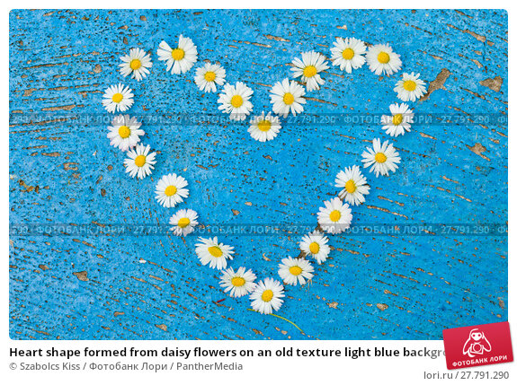 Купить «Heart shape formed from daisy flowers on an old texture light blue background  turquoise background», фото № 27791290, снято 17 ноября 2018 г. (c) PantherMedia / Фотобанк Лори