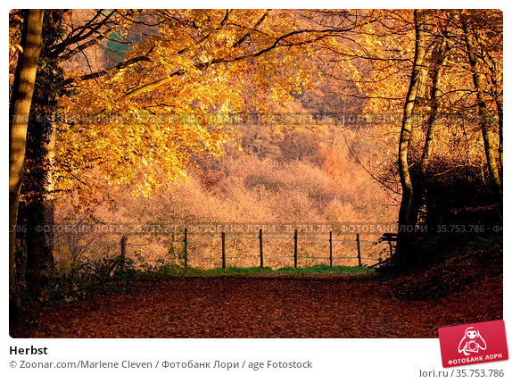 Herbst. Стоковое фото, фотограф Zoonar.com/Marlene Cleven / age Fotostock / Фотобанк Лори