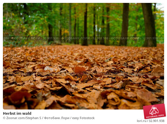 Herbst im wald. Стоковое фото, фотограф Zoonar.com/Stephan S / easy Fotostock / Фотобанк Лори