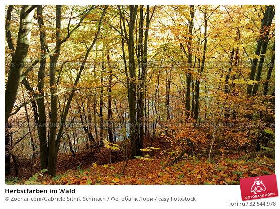 Купить «Herbstfarben im Wald», фото № 32544978, снято 7 декабря 2019 г. (c) easy Fotostock / Фотобанк Лори
