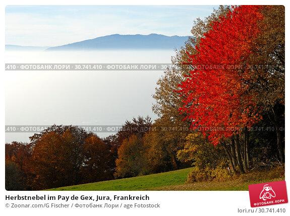 Купить «Herbstnebel im Pay de Gex, Jura, Frankreich», фото № 30741410, снято 16 июня 2019 г. (c) age Fotostock / Фотобанк Лори