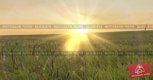 Hill meadow timelapse at the summer or autumn time. Wild endless nature and rural field. Sun rays over green grass. Motorised dolly slider movement. Стоковое видео, видеограф Александр Маркин / Фотобанк Лори