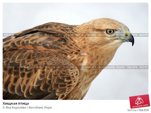 Купить «Хищная птица», эксклюзивное фото № 764974, снято 19 марта 2009 г. (c) Яна Королёва / Фотобанк Лори