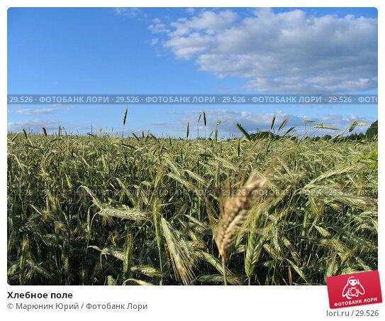 Хлебное поле, фото № 29526, снято 27 июня 2005 г. (c) Марюнин Юрий / Фотобанк Лори