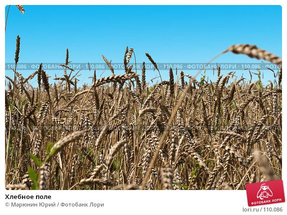 Хлебное поле, фото № 110086, снято 5 августа 2007 г. (c) Марюнин Юрий / Фотобанк Лори