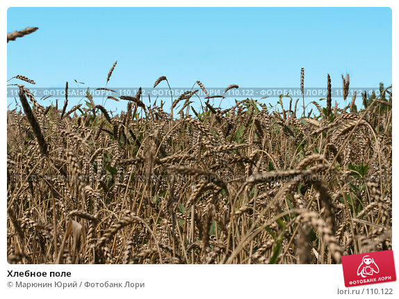 Хлебное поле, фото № 110122, снято 5 августа 2007 г. (c) Марюнин Юрий / Фотобанк Лори