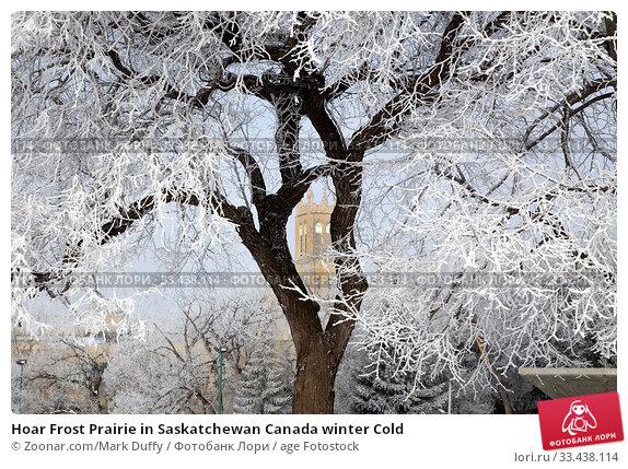 Купить «Hoar Frost Prairie in Saskatchewan Canada winter Cold», фото № 33438114, снято 10 апреля 2020 г. (c) age Fotostock / Фотобанк Лори