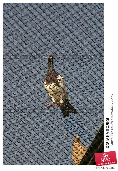 ХОЧУ НА ВОЛЮ!, фото № 95886, снято 2 октября 2007 г. (c) Антон Алябьев / Фотобанк Лори