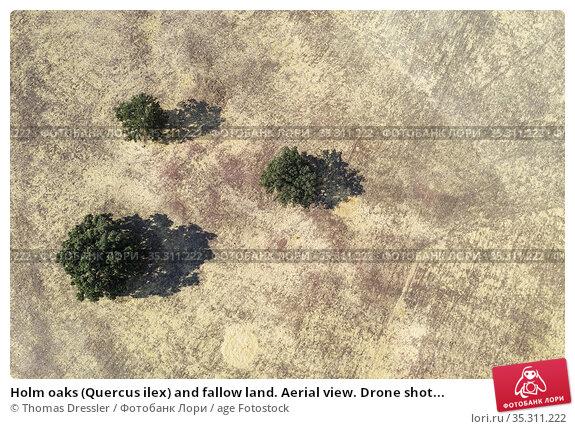 Holm oaks (Quercus ilex) and fallow land. Aerial view. Drone shot... Стоковое фото, фотограф Thomas Dressler / age Fotostock / Фотобанк Лори