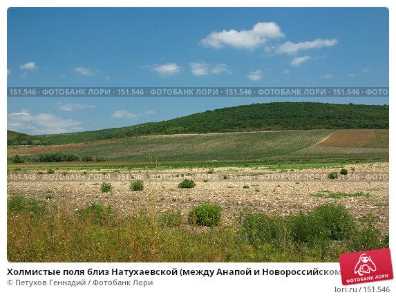 Холмистые поля близ Натухаевской (между Анапой и Новороссийском), фото № 151546, снято 9 августа 2007 г. (c) Петухов Геннадий / Фотобанк Лори