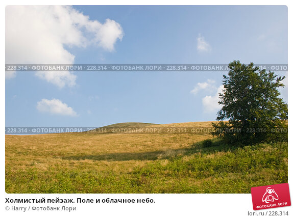 Холмистый пейзаж. Поле и облачное небо., фото № 228314, снято 19 августа 2007 г. (c) Harry / Фотобанк Лори