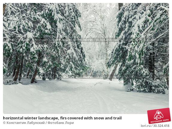 Купить «horizontal winter landscape, firs covered with snow and trail», фото № 30324418, снято 4 февраля 2018 г. (c) Константин Лабунский / Фотобанк Лори