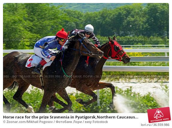 Horse race for the prize Sravnenia in Pyatigorsk,Northern Caucasus... Стоковое фото, фотограф Zoonar.com/Mikhail Pogosov / easy Fotostock / Фотобанк Лори