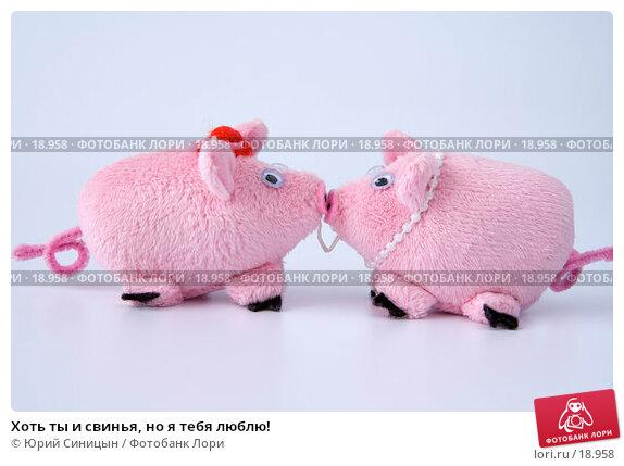 Купить «Хоть ты и свинья, но я тебя люблю!», фото № 18958, снято 22 февраля 2007 г. (c) Юрий Синицын / Фотобанк Лори