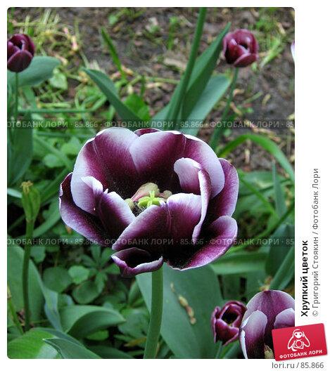 Хрупкий цветок, фото № 85866, снято 21 мая 2007 г. (c) Григорий Стоякин / Фотобанк Лори