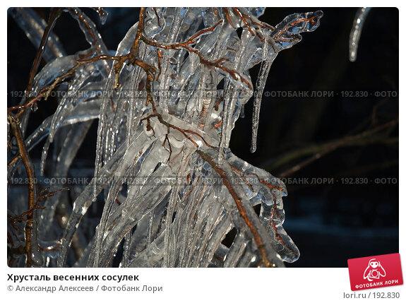 Хрусталь весенних сосулек, эксклюзивное фото № 192830, снято 19 марта 2006 г. (c) Александр Алексеев / Фотобанк Лори