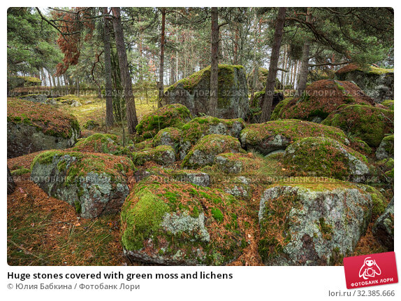 Huge stones covered with green moss and lichens (2019 год). Стоковое фото, фотограф Юлия Бабкина / Фотобанк Лори