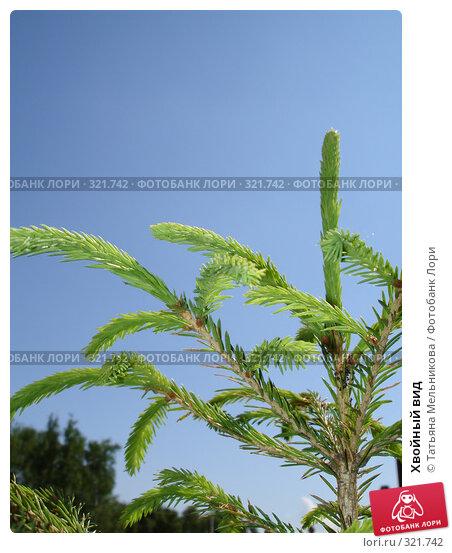 Купить «Хвойный вид», фото № 321742, снято 13 июня 2008 г. (c) Татьяна Мельникова / Фотобанк Лори