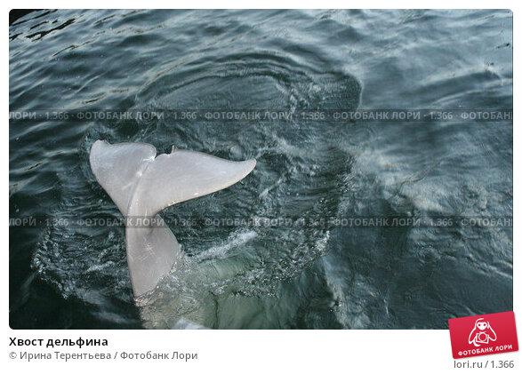 Хвост дельфина, эксклюзивное фото № 1366, снято 15 сентября 2005 г. (c) Ирина Терентьева / Фотобанк Лори