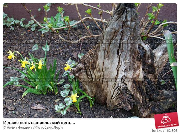 И даже пень в апрельский день..., фото № 162806, снято 2 апреля 2006 г. (c) Алёна Фомина / Фотобанк Лори