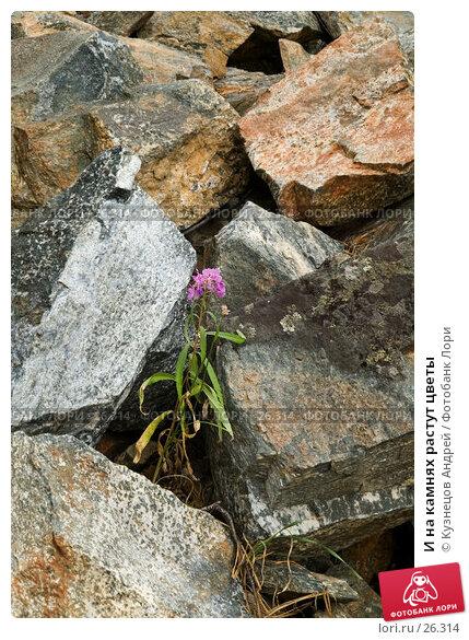 И на камнях растут цветы, фото № 26314, снято 11 августа 2005 г. (c) Кузнецов Андрей / Фотобанк Лори