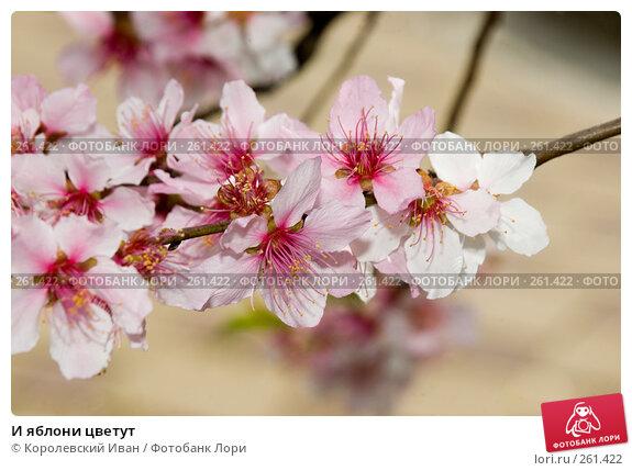 И яблони цветут, фото № 261422, снято 20 апреля 2008 г. (c) Королевский Иван / Фотобанк Лори
