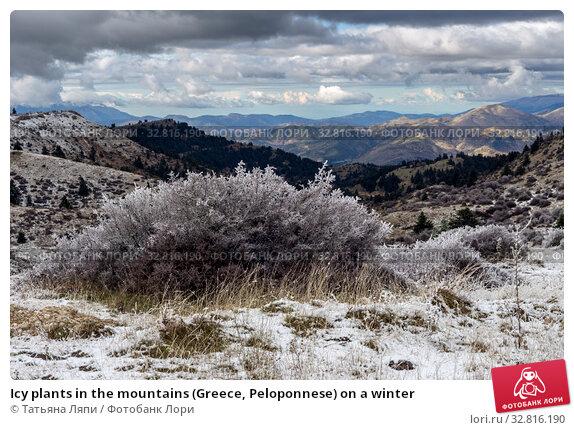 Купить «Icy plants in the mountains (Greece, Peloponnese) on a winter», фото № 32816190, снято 24 декабря 2019 г. (c) Татьяна Ляпи / Фотобанк Лори