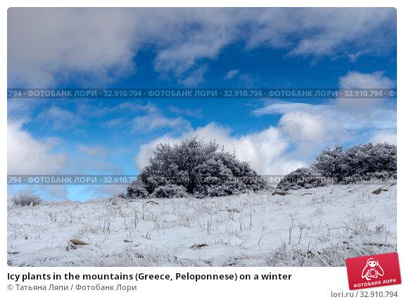 Icy plants in the mountains (Greece, Peloponnese) on a winter. Стоковое фото, фотограф Татьяна Ляпи / Фотобанк Лори