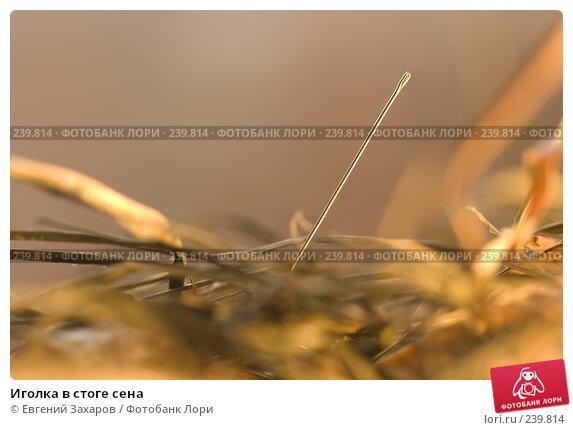Купить «Иголка в стоге сена», фото № 239814, снято 25 марта 2008 г. (c) Евгений Захаров / Фотобанк Лори