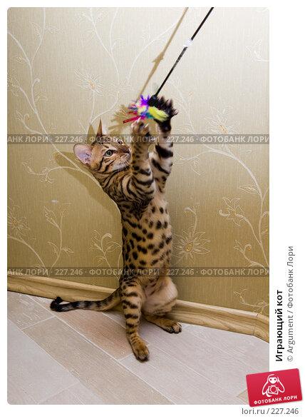 Играющий кот, фото № 227246, снято 17 февраля 2008 г. (c) Argument / Фотобанк Лори