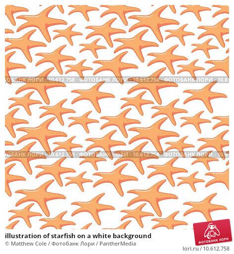illustration of starfish on a white background. Стоковая иллюстрация, иллюстратор Matthew Cole / PantherMedia / Фотобанк Лори