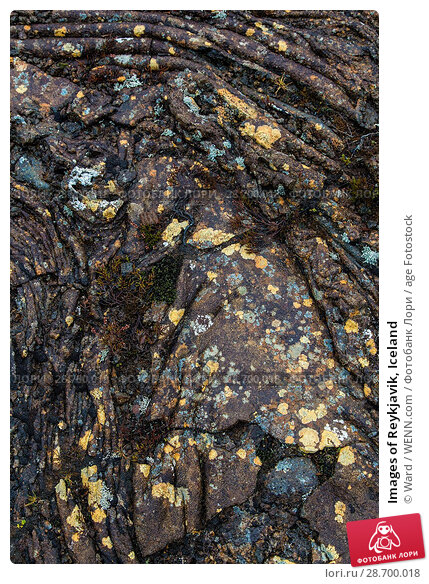 Купить «Images of Reykjavik, Iceland Featuring: Lava Rock Formation, Iceland Where: Reykyavik, Iceland When: 24 Oct 2016 Credit: Ward/WENN.com», фото № 28700018, снято 24 октября 2016 г. (c) age Fotostock / Фотобанк Лори
