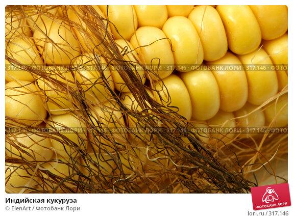 Купить «Индийская кукуруза», фото № 317146, снято 22 апреля 2018 г. (c) ElenArt / Фотобанк Лори
