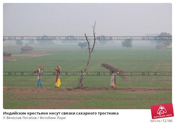 Индийские крестьяне несут связки сахарного тростника, фото № 12166, снято 11 декабря 2004 г. (c) Вячеслав Потапов / Фотобанк Лори