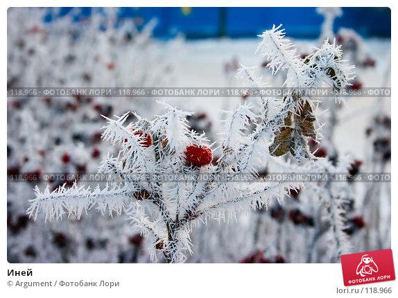 Купить «Иней», фото № 118966, снято 28 декабря 2004 г. (c) Argument / Фотобанк Лори