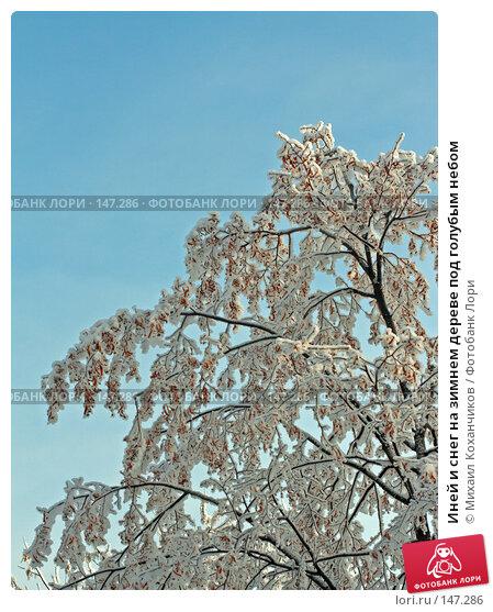 Иней и снег на зимнем дереве под голубым небом, фото № 147286, снято 12 декабря 2007 г. (c) Михаил Коханчиков / Фотобанк Лори