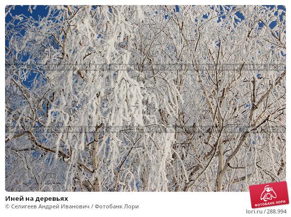 Иней на деревьях, фото № 288994, снято 4 марта 2008 г. (c) Селигеев Андрей Иванович / Фотобанк Лори