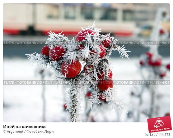 Иней на шиповнике, фото № 114178, снято 28 декабря 2004 г. (c) Argument / Фотобанк Лори